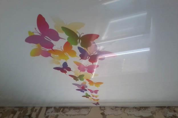 Фото фотопечать бабочки